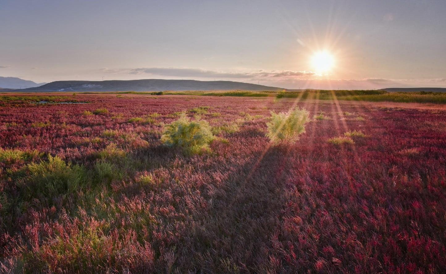 تالاب سولدوز نقده و توسعه اکوتوریسم و گردشگری طبیعت